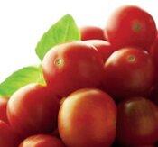"""Tomat """"Gardener´s Delight"""""""